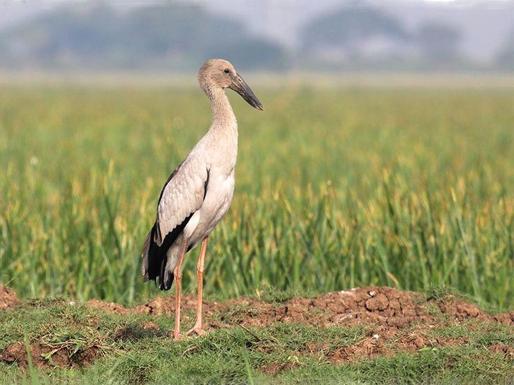 Chilika Wildlife Sanctuary - in Odisha, India