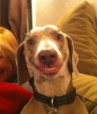 Best Dog Smile Ever!
