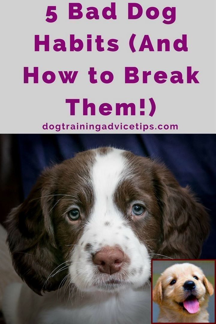 House Training A Puppy In 5 Days And Dog Behavior Fighting