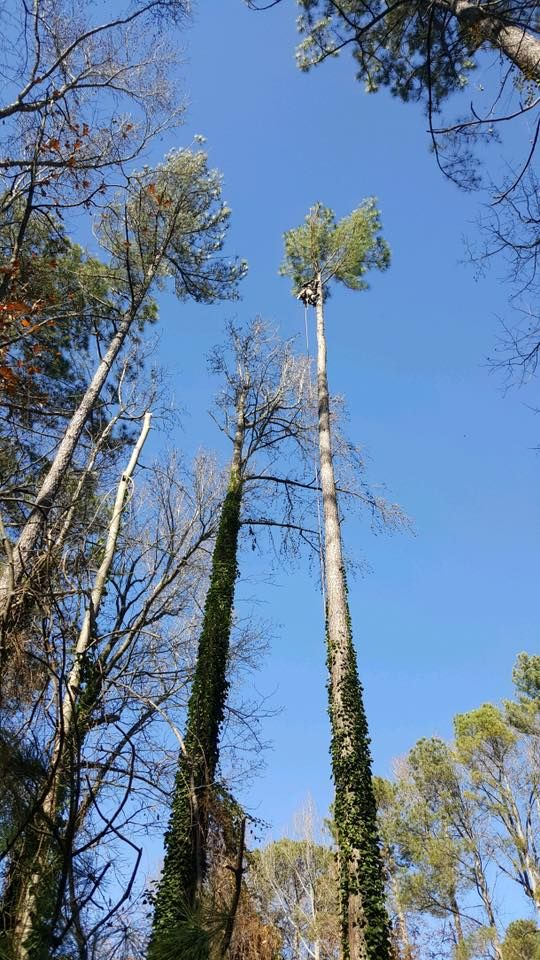 RT https://t.co/PsG1Hedc4E RT https://t.co/FM8nQWgiPp RT https://t.co/y9EYw0NBR5 RT https://t.co/PL1sXSkwBy Can you spot us on the tree? Removing a few large 90foot pine trees in #Raleigh https://t.co/JfecFSCOH3 #torontobusiness https://t.co/plLbwalB5J