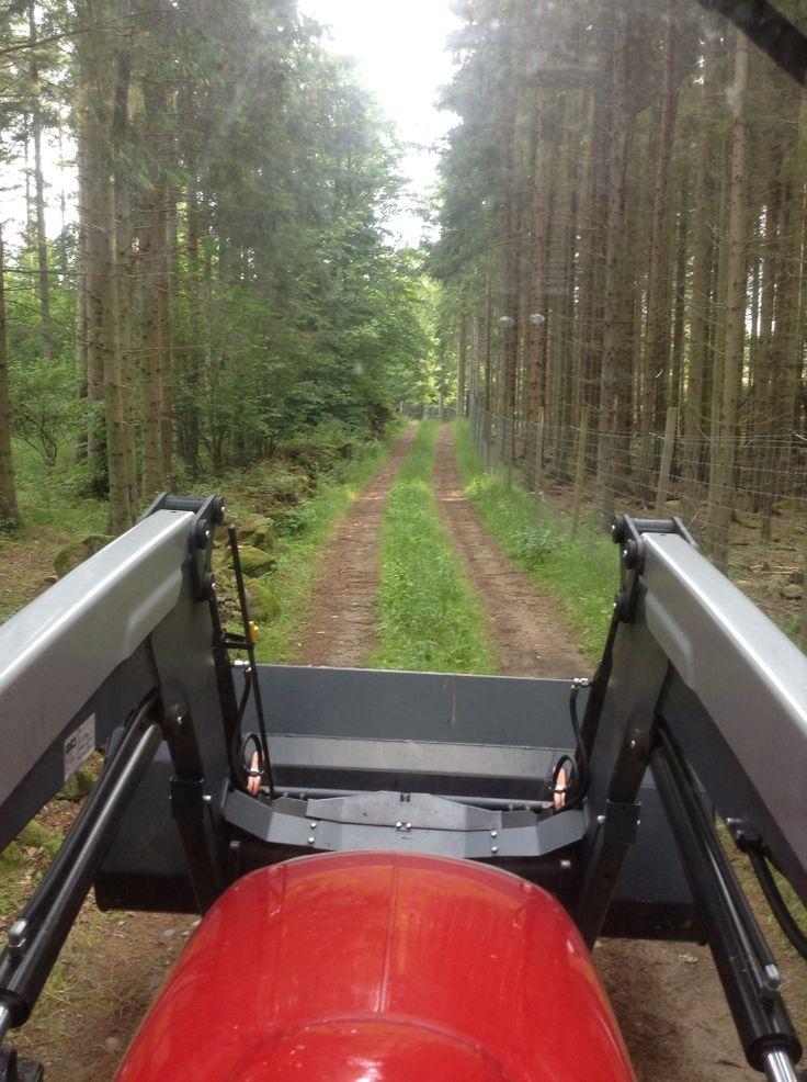 Härliga skogsvägar att promenera på.