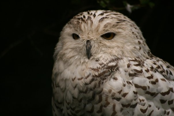 sweet owl pic. only because it was taken at the zoo and i had to work around the cage stuff