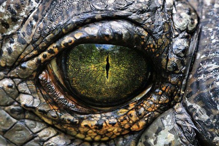 Animal Eyes - eyes Photo
