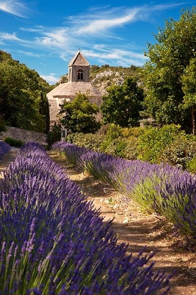 Lavender path, Provence, France