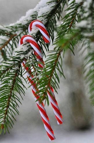 candy canes!
