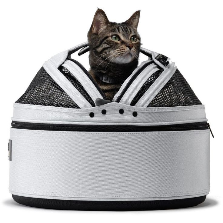 Sleepypod Mobile Pet Bed & Carrier, Glacier Silver  Free standard UK shipping    #cat #cats #catsagram #catstagram #instagood #petstagram #petsagram #catsofinstagram #ilovemycat #instagramcats #lovecats #catlover #instacat_meows #luxurcat #petfeeder #petsonthemove #travellingpet #petbowl #pettravel