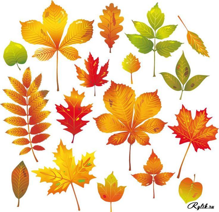 фото осенних листьев деревьев