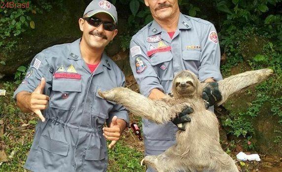 Bicho-preguiça é encontrado dentro de pousada em São Sebastião