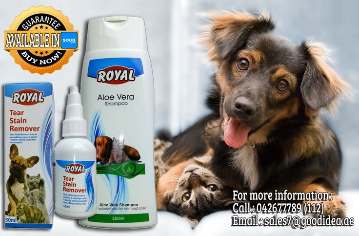Good grooming is about more than just having a pretty pet. You're also tackling potential health conditions.  •Royal Aloe Vera Shampoo for vital substances for skin and coat •Royal Tear stain remover  For affordable prices :) For more information: Call:042677789 loc 112 Email:sales7@goodidea.ae ◘ We are open for those who have petshops,pet store and Good samaritans helping those stray with promotional offer ♥ Also Available in : SOUQ.COM