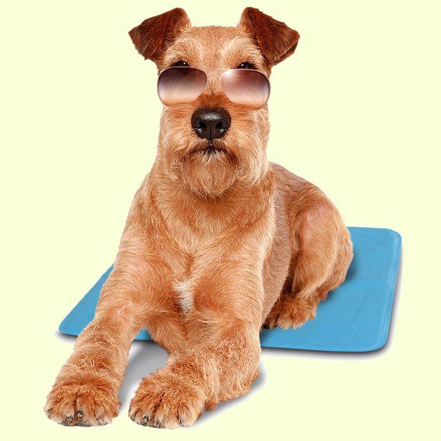 Охлаждающий коврик-лежак для собак и кошек Ferplast PET COOL MAT  http://zverushka.org.ua/product/ohlazhdayushii_kovrik_lezhak_dlya_sobak_i_koshek_ferplast_pet_cool_mat  Внутри коврика есть особая жидкость, благодаря которой его температура понижается на 10 градусов ниже окружающей. Эффект длится 4 часа. Чудо-коврик не требует внешнего эл.питания, заморозки или иных действий – он готов к использованию, а после истечения четырех часов нужен лишь небольшой перерыв для восстановления…