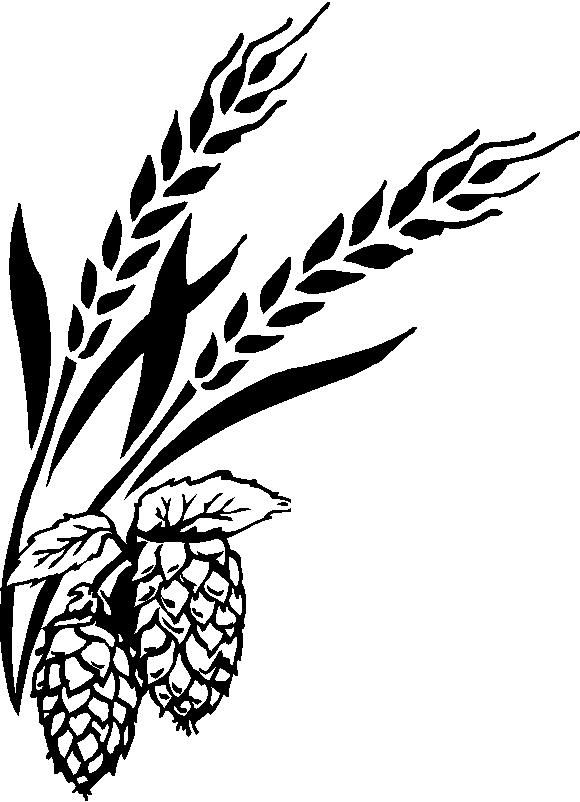 16 best images about hops and barley on Pinterest | Fields ...