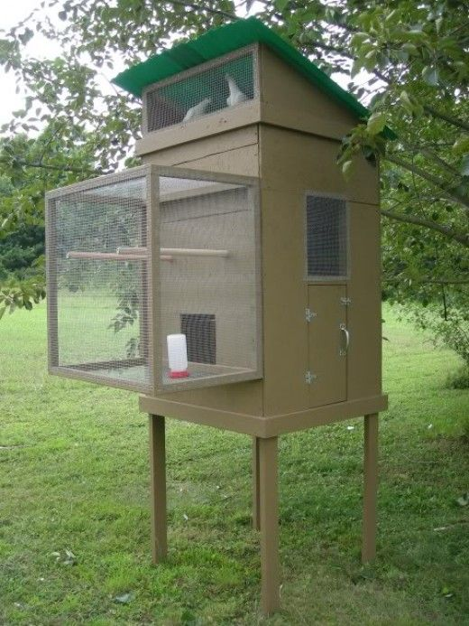 Small pigeon loft design ideas pigeon coop hobby for Small loft design
