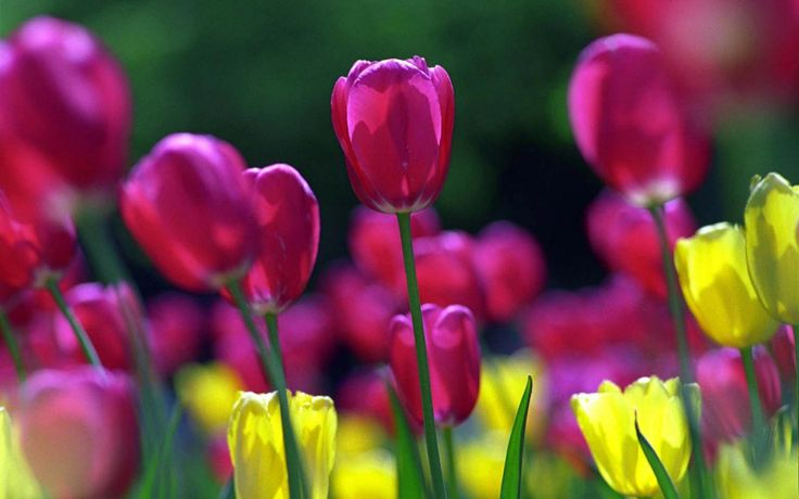 Spring Flowers Background | : Spring Flowers Wallpapers, Images, Photos, Pictures and Backgrounds ...