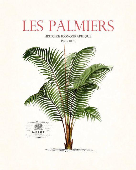 Vintage French Palm Tree Collage No.30 - Giclee - Canvas Art - Botanical Print - Nautical Art, Beach Cottage Decor, Coastal Decor - Poster