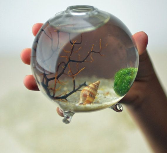 Marimo - Japanese Moss Ball Aquarium - footed bud vase -  with sea fan - shells - and sand This person's etsy shop has awesome terrariums as well.