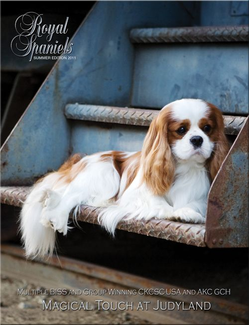 The Royal Spaniels Magazine about Cavalier King Charles Spaniel and English Toy Spaniels
