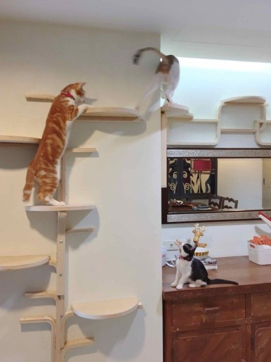 Wall-mounted cat tree made out of Ikea Frosta stools.