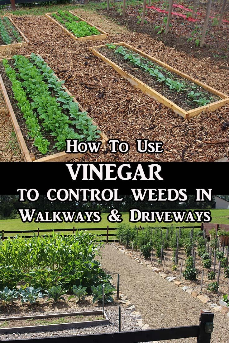Kill weeds in flower beds - How To Use Vinegar To Kill Weeds A More Natural Approach