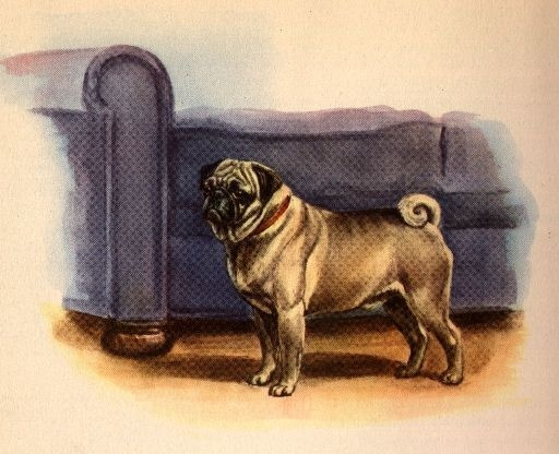 [PIN_AUTHOR-USERNAME]: Pugs Posters, Pugs Books, Vintage Dogs, Art Prints, Dogs Art, Pugs Things, Dogs Prints, Pugs Life, Books Illistr