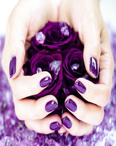 rosas roxas por angelita