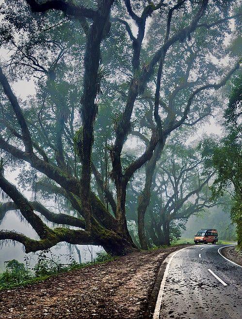 Calilegua National Park  Ledesma - Jujuy - Argentina