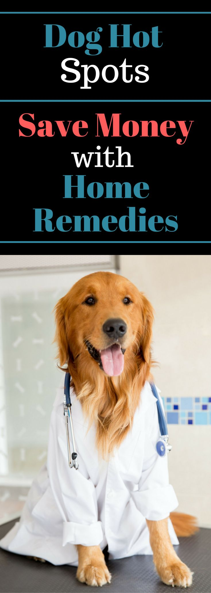 Dog Hot Spots - Save Money with Home Remedies