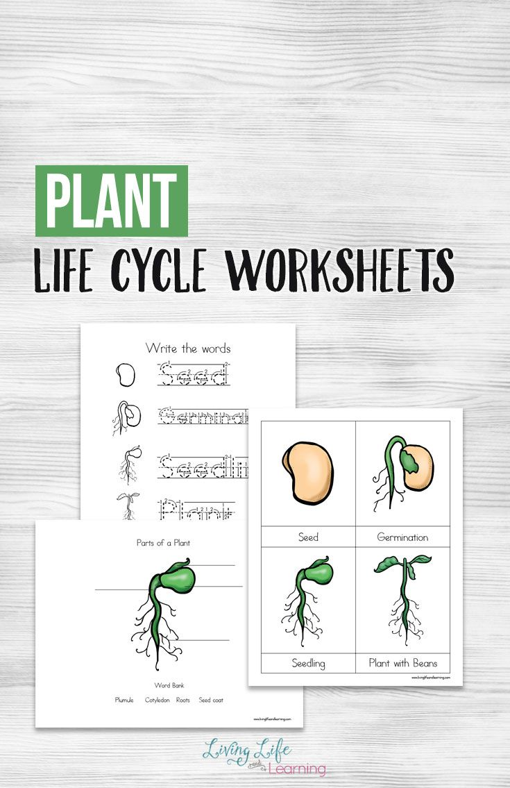 Plant Life Cycle Worksheets For Kids Plant Life Cycle Worksheet Plant Life Cycle Plants Life Cycle Activities [ 1135 x 735 Pixel ]
