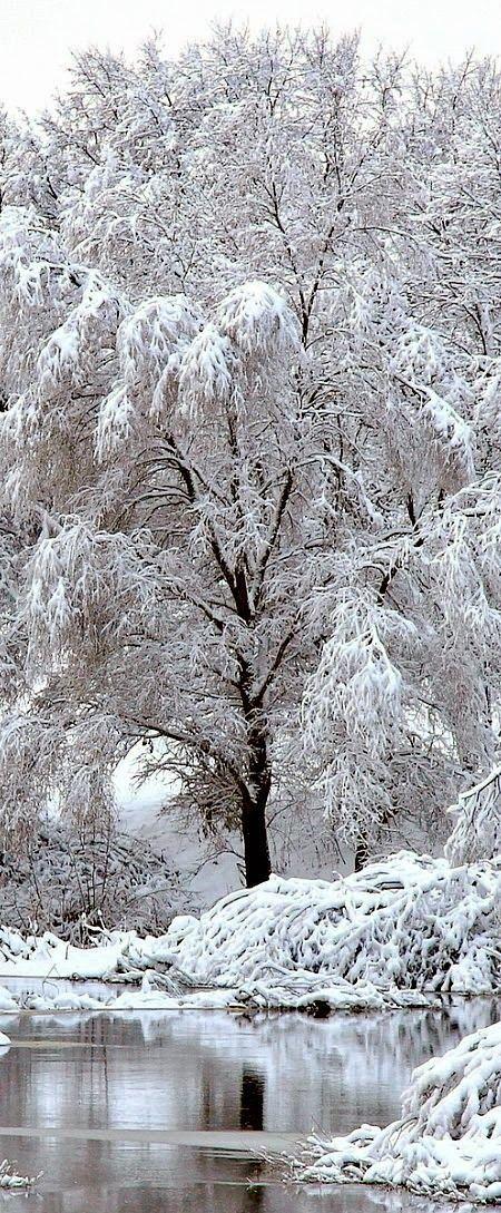 Inspiration aus der Natur für den Winter - Farbtyp Kerstin Tomancok / Farb-, Typ-, Stil & Imageberatung