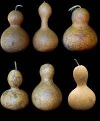 bottle neck  gourd