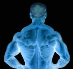 Best Back Exercise works the lats