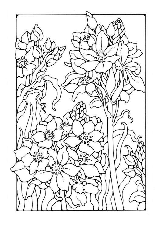 """iColor """"Gardens"""" ~ Lilies"""