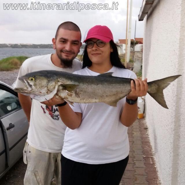Pesca a Calasetta -  Surfcasting al pesce serra pesca fishing