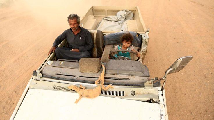 Una niña saudí sostiene un lagarto monitor atado a una cuerda después de su captura en la zona del desierto cerca de Tabuk, a unos 1.500 kilómetros al noroeste de la capital saudí, Riad, el 6 de mayo de 2016. En la segunda foto maneja un vehículo con el largarto sobre el capot y acompañada por su padre. Muchos saudíes cazan lagartos y los venden a los médicos que lo utilizan como una medicina herbal para tratar la diabetes y las enfermedades cancerígenas. (AFP / MOHAMED ALHWAITY) - See more…