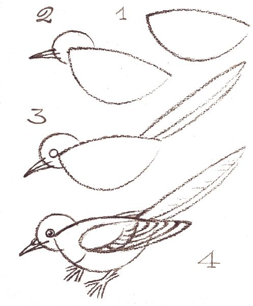 How to draw a bird, step-by-step. (Right-click on image to print.) (art, kids, drawing lesson)