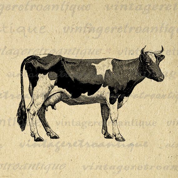 Digital Graphic Cow Printable Farm Animal Download Image Vintage Clip Art Jpg Png Eps 18x18 HQ 300dpi No.790 @ vintageretroantique.etsy.com