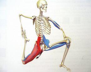 b Co je psoas? jeden sval,který je stále zahalen tajemstvím, je hluboký kyčelní flexor neboli ohýbač. Dlouho byl význam tohoto svalu přehlížen, ale v poslední době instruktoři jógy a fyzioterapeu...