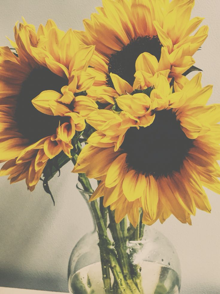 Soft photography. Vintage sunflowers photography. Pretty flowers. Beauty.