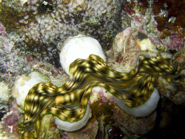 #scuba #diving #maldives