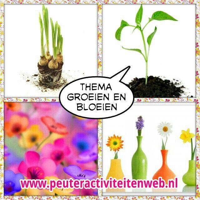Van bloembol tot bloem. Van zaadje tot plant. Van ei tot kip. www.peuteractiviteitenweb.nl