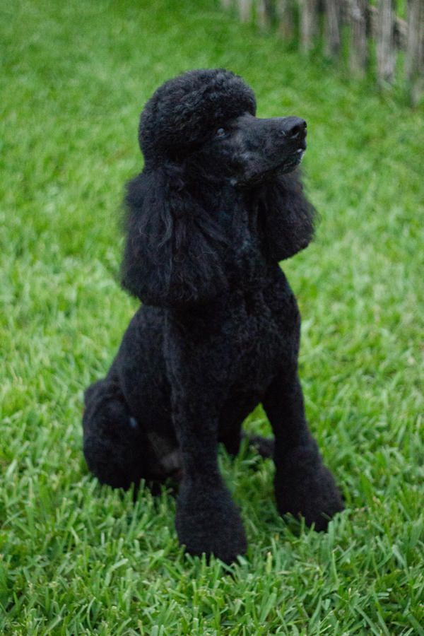 Pin By Thomas Hays On Dogs Smartest Dog Breeds Dog Breeds