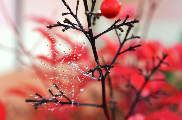 Cobweb water by Antonella Vannucci on 500px