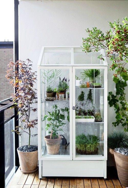 Jardinagem: Mini Estufa - Gardening: Mini Greenhouse - Gosto Disto!