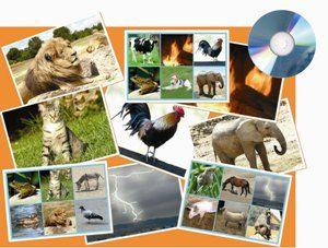 Hanglottó: állatok és természeti jelenségek