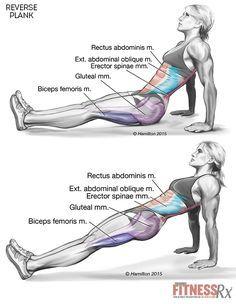 Apriete su núcleo y parte inferior del cuerpo con tablas inversas