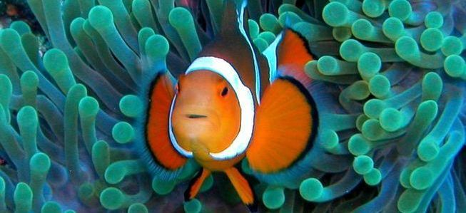 Check out this clownfish living in an anemone. Incredible.