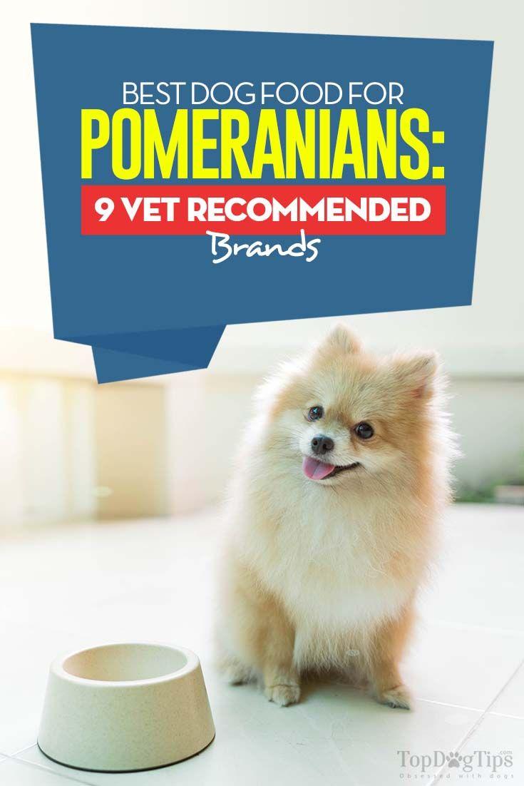 9 Vet Recommended Dog Foods For Pomeranians Best Dog Food Dogs Dog Food Recipes
