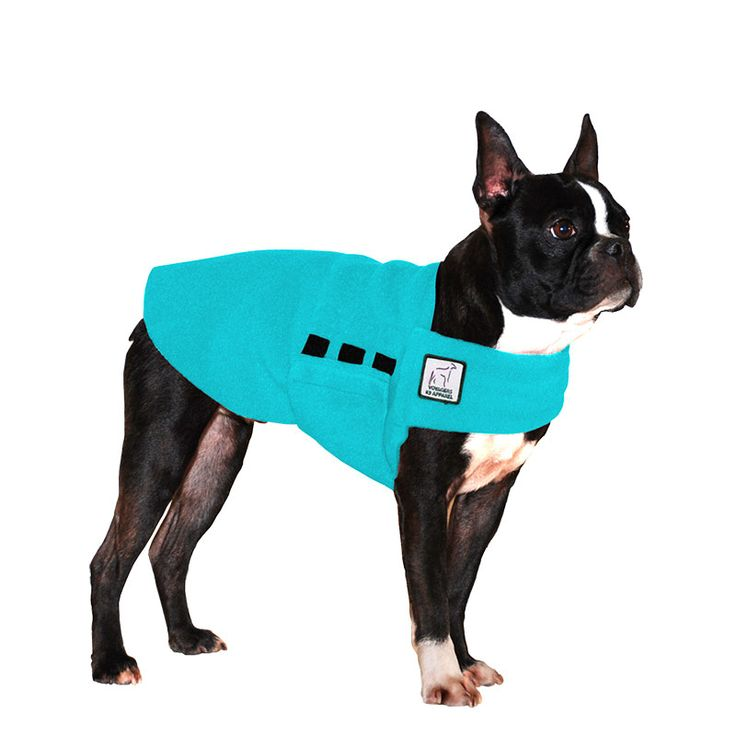 Turquoise Boston Terrier Dog Tummy Warmer, great for warmth, anxiety and laying with our dog rain coat. High performance material. Made in the USA.