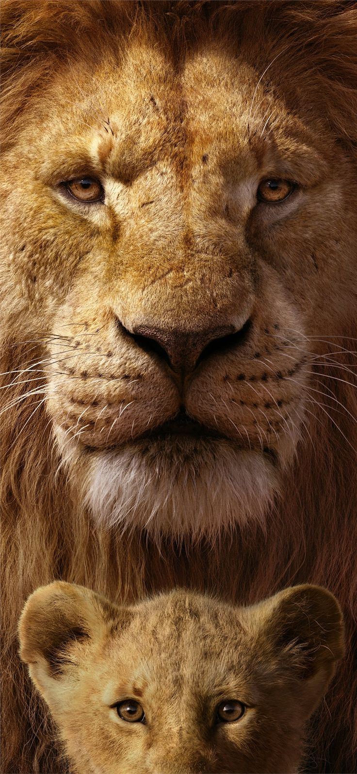 the lion king 8k iPhone 11 Wallpapers Lion king pictures