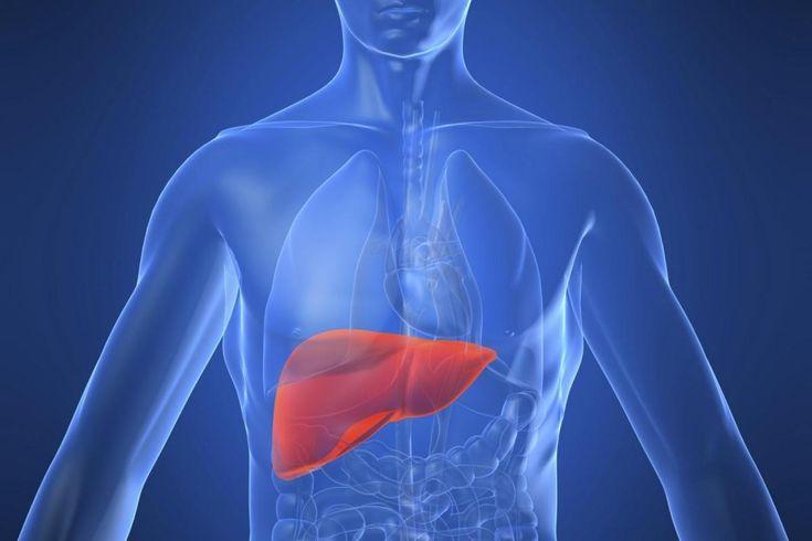 Il fegato invecchia meno se posto in un microambiente più giovane | Sardegna Medicina.Il fegato invecchia meno se posto in un microambiente più giovane Sardegna Medicina