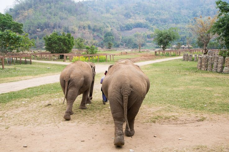 Elephant Nature Park is an elephant rescue and rehabilitation centre. It has a strong focus on elephants, but also cares for other animals like dogs, cats and buffaloes.